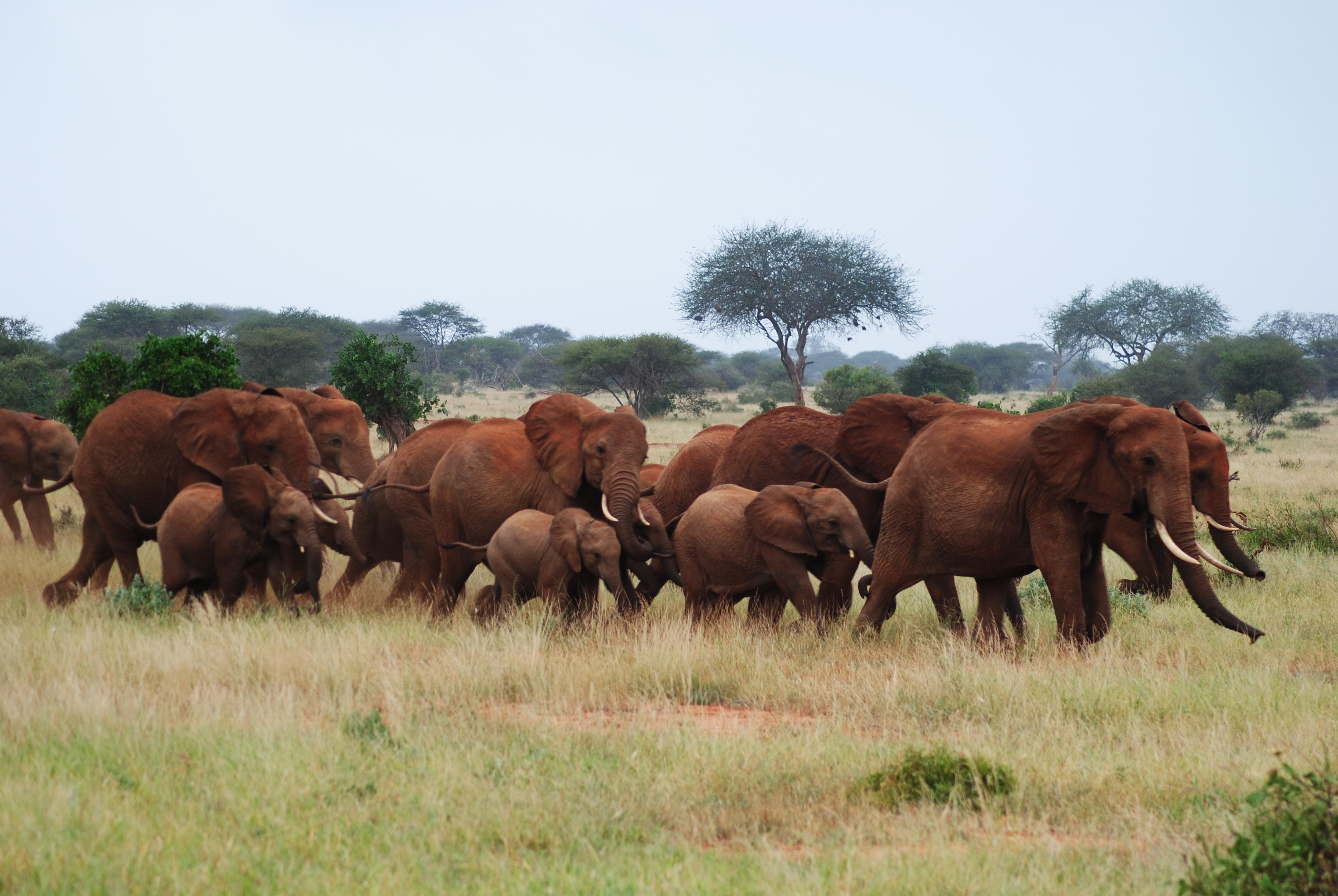 download a pdf in safari